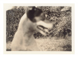 Blurry Photo of Fox Terrier