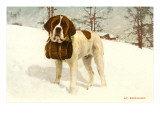 St Bernard with Rescue Keg