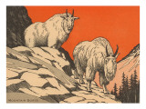 Woodcut of Mountain Goats
