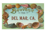 Sea Shells  Souvenir from Del Mar  California