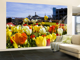 Tulips on Pier 39 with Coit Tower in the Background