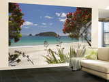 Pohutukawa Tree in Bloom and Hahei  Coromandel Peninsula  North Island  New Zealand