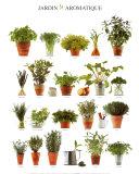 Jardin aromatique Reproduction d'art