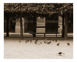Empty Bench with Pigeons