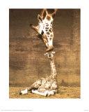 Girafe - Premier baiser Reproduction d'art par Ron D'Raine