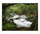 Greenbrier River Scene- II