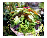 Garden Bowl of Foliage