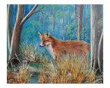 Fox in Marsh