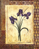 Moroccan Iris
