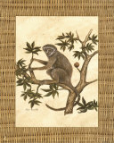 Monkey in a Tree II