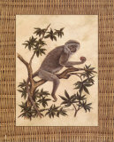 Monkey in a Tree I