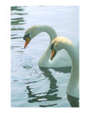 Swans