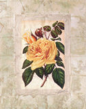 Victorian Rose II