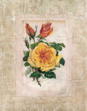 Victorian Rose I