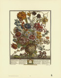 Twelve Months of Flowers  1730  March