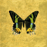 Butterfly on Gold