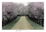 Apple Blossom Lane