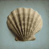 Seashell Study II