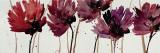 Blushing Blooms Reproduction d'art par Natasha Barnes