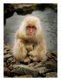 Snowy the Snow Monkey