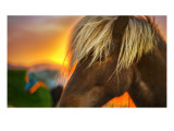 Flaxen Horse at Sunrise