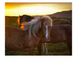 The Golden Horse in Iceland