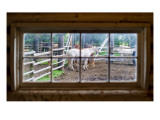 Horse in Window