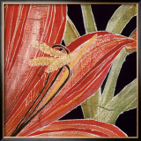 Red Amaryllis with Stem