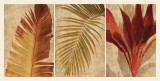 Palm Vista I