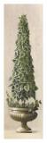 Florentine Topiary I