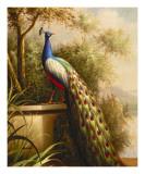 Regal Peacock