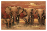 Bull Elephants