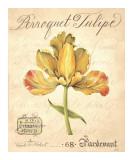 Perroquet Tulipe