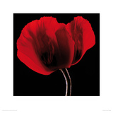 Rich Red Poppy