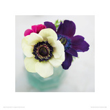 White  Purple and Red Anemones