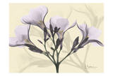 Oleander in Purple on Beige