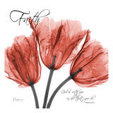 Royal Red Tulip  Faith