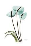 Blue Anthurium