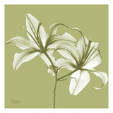 Twin Lilies on Pale Green