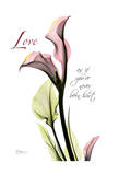Calla Lily in Pink  Love