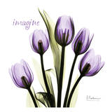 Tulip in Purple  Imagine