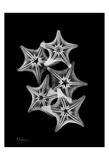 Star Fish Group on Black Reproduction d'art par Albert Koetsier