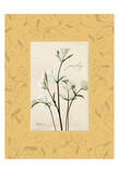 Parsley With Yellow Damask Frame