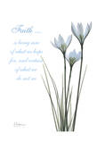 White Rain Lily  Faith