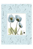 Poppies With Blue Damask Frame