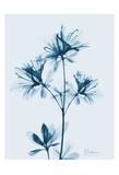 Azalea in Blue II