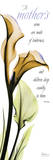 Mother  Calla Lily in Yellow