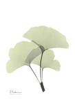 Ginkgo in Pale Green II