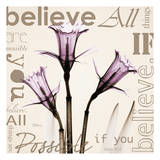 Believe  Violet Daffodils
