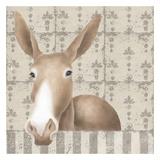 Mule Posing Close-Up